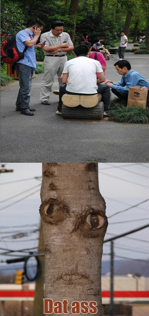funny-picture-dat-ass-tree