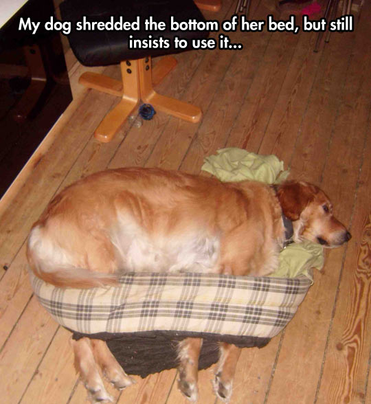 funny-picture-dog-bottom-bed-sleeping