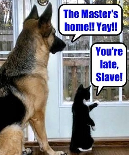 funny-picture-dog-cat-master