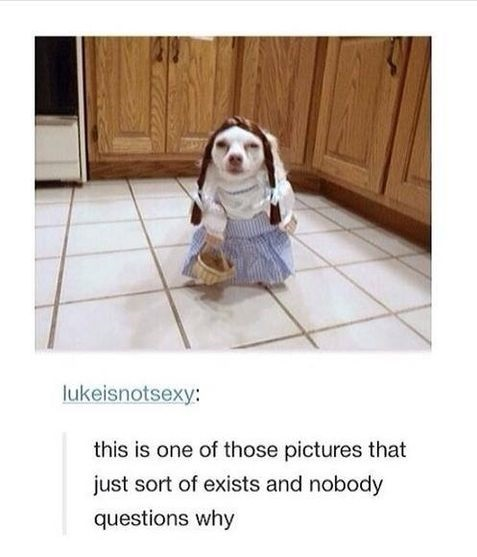 funny-picture-dog-exist-no-questions