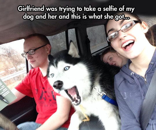 funny-picture-dog-selfie-car-driver