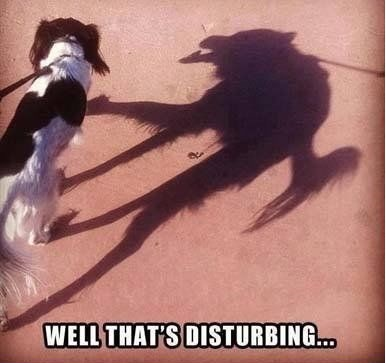 funny-picture-dog-shade-creepy