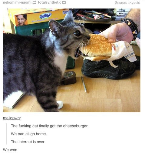 funny-picture-internet-cat-cheeseburger