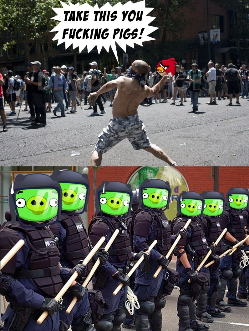 funny-picture-pigs-angry-birds-riot