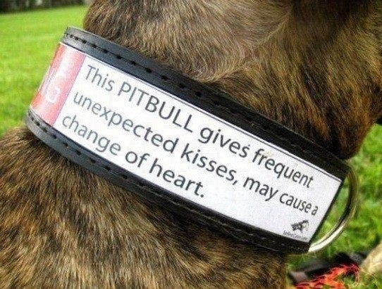 funny-picture-pitbull-kiss-sign
