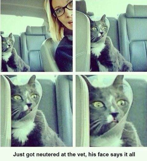 funny-picture-poor-cat-face