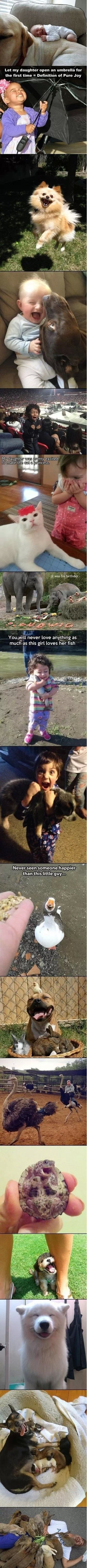funny-picture-pure-joy-compilation