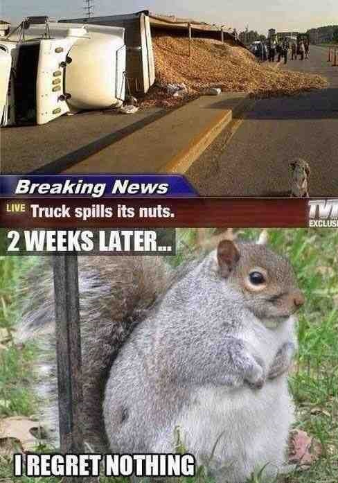 funny-picture-squirrel-n0-regrets