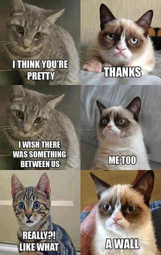 funny-picture-Grumpy-Cat-wall-between-separation
