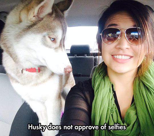 funny-picture-Husky-selfie-girl-car