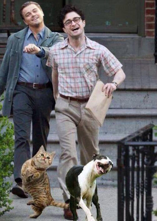 funny-picture-Leo-DiCaprio-Daniel-Radcliffe-dog-cat-walking
