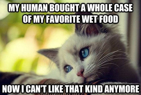 funny-picture-baby-cat-thinking-food