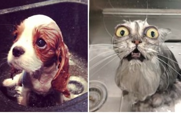 funny-picture-bath-dog-cat