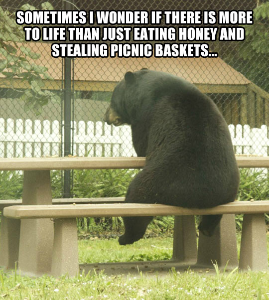 funny-picture-bear-alone-asking-life