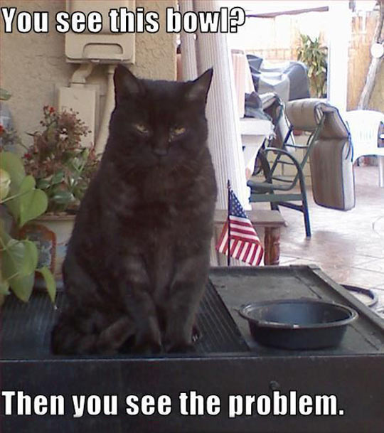 funny-picture-black-cat-bowl-empty