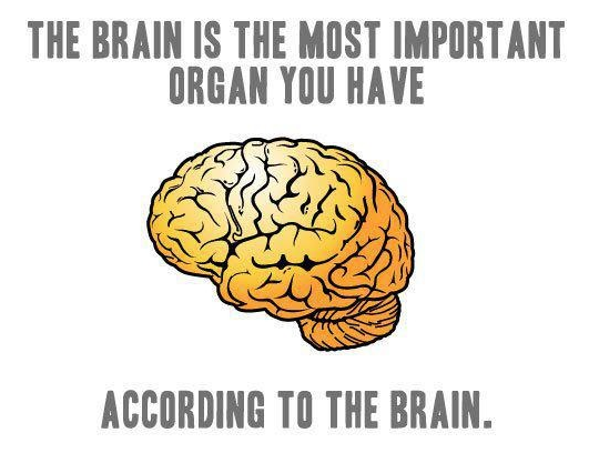 funny-picture-brain-most-important