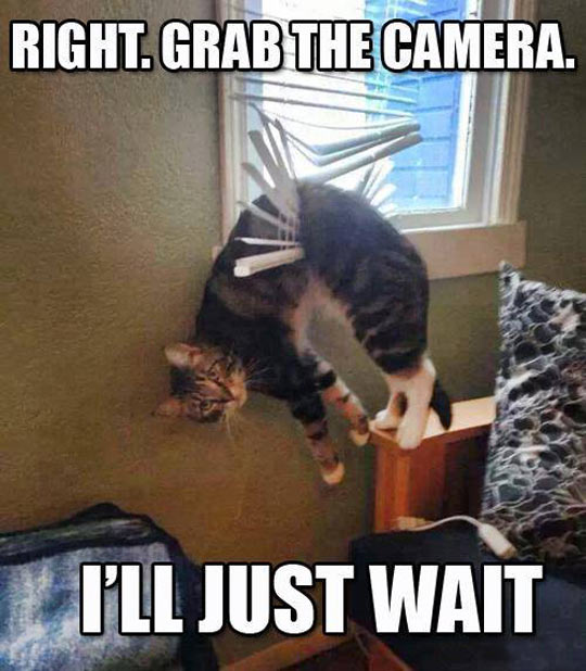 funny-picture-cat-blind-broken-hanging