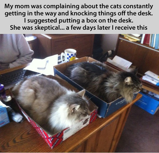 funny-picture-cat-box-desk-fluffy-kitty
