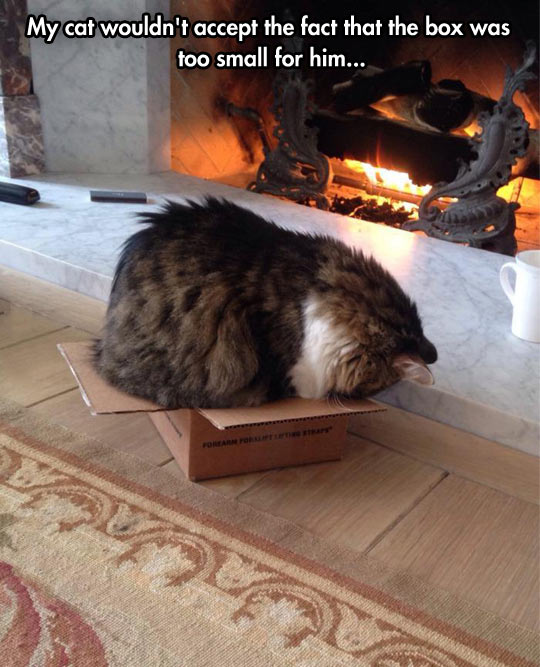 funny-picture-cat-box-fit-big-fireplace