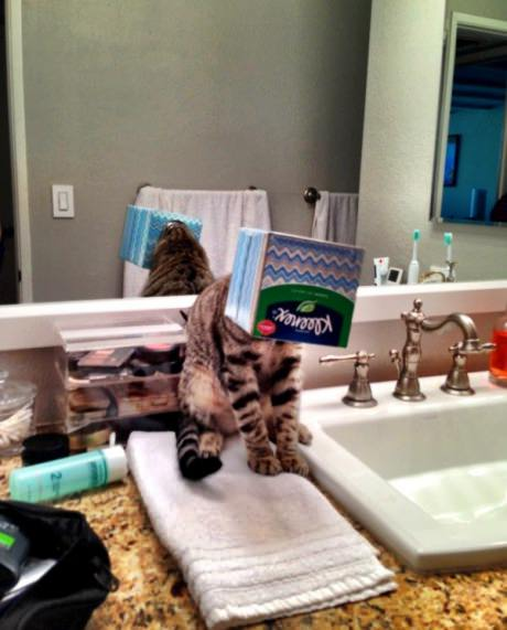 funny-picture-cat-box-stuck