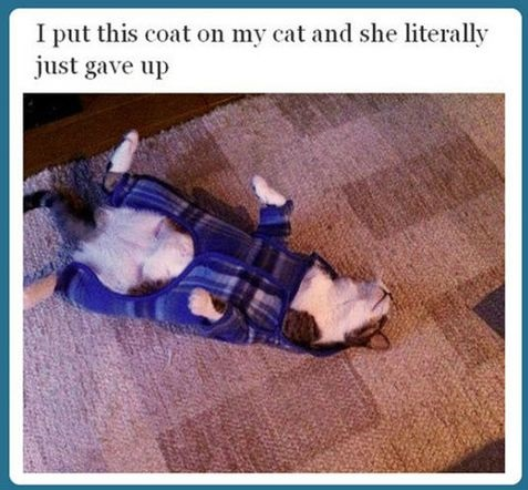 funny-picture-cat-coat-give-up