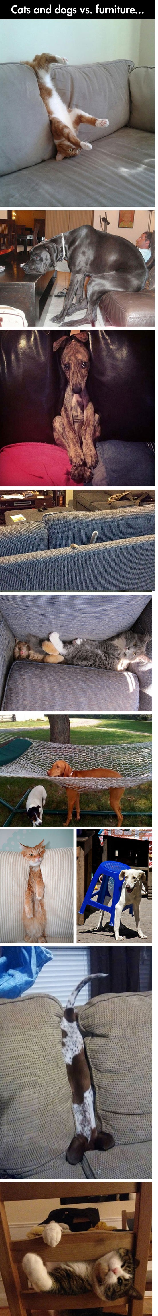 funny-picture-cat-dog-versus-furniture