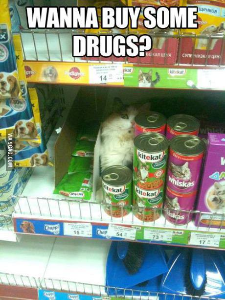 funny-picture-cat-drugs