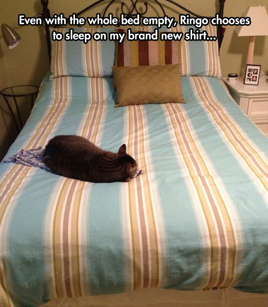 funny-picture-cat-laying-bed-new-shirt