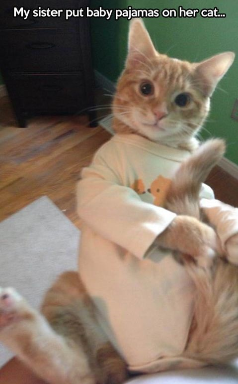 funny-picture-cat-pajamas