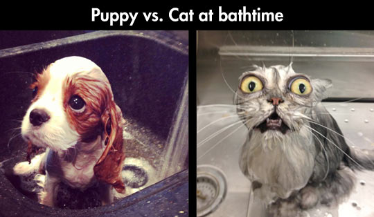 funny-picture-cat-puppy-bath-sink-water