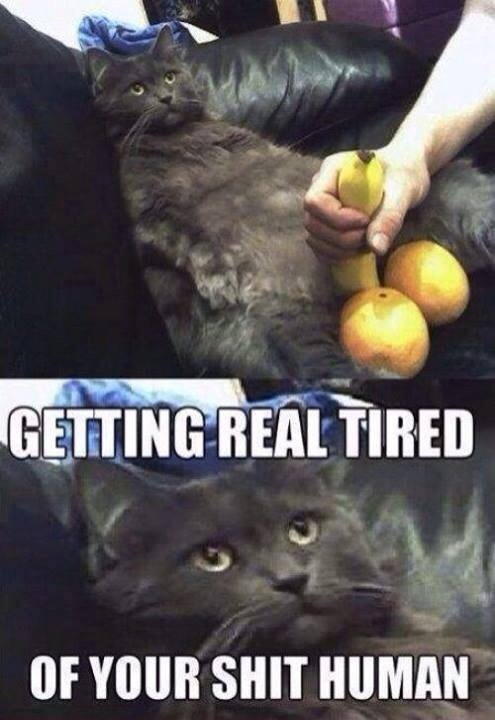 funny-picture-cat-tired-shit-human