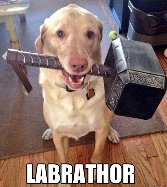 funny-picture-dog-Thor-hammer-Labrador