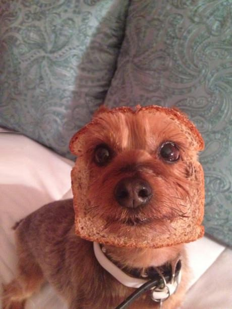 funny-picture-dog-bread