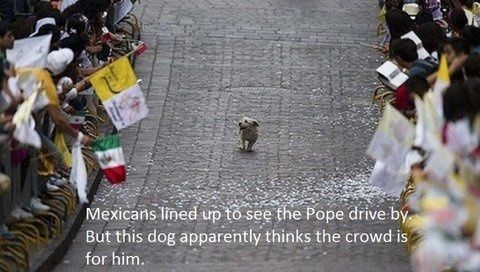 funny-picture-dog-crowd