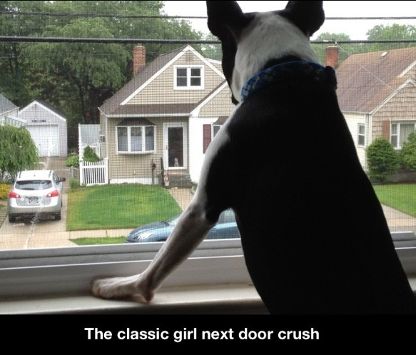 funny-picture-dog-crush-next-door