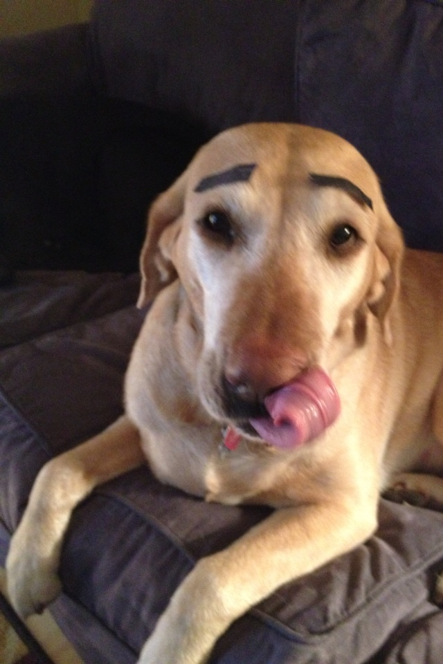 funny-picture-dog-eyebrows
