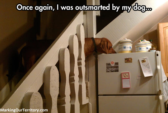 funny-picture-dog-fridge-cookie-stairs