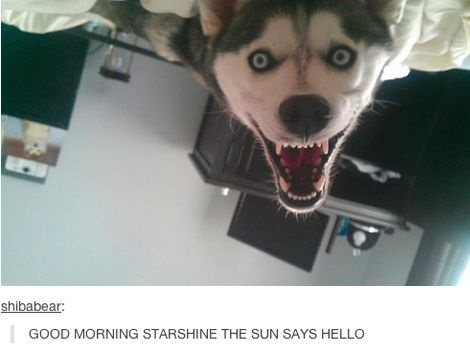 Funny Memes For The Morning : Good morning human