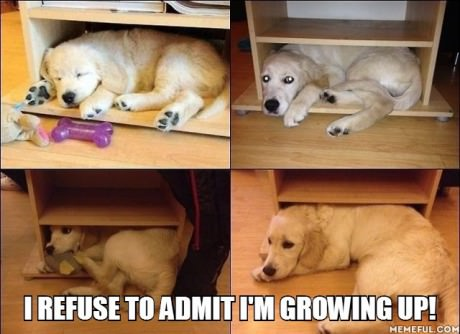 funny-picture-dog-grow-up
