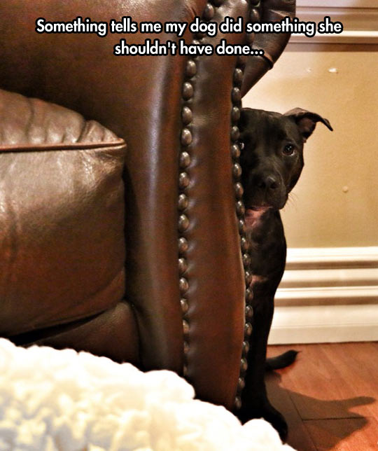 funny-picture-dog-hiding-sofa-guilty