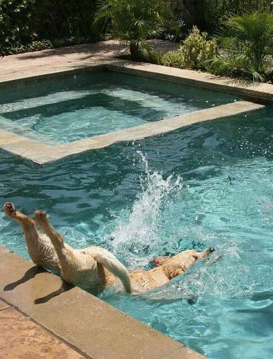 funny-picture-dog-jumping-pool-falling