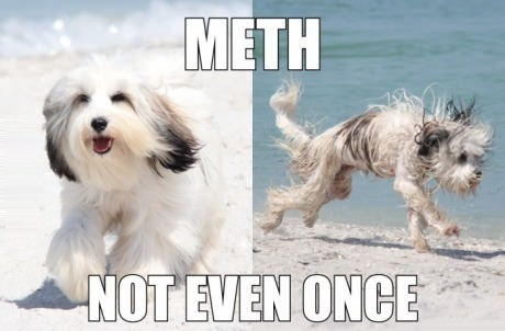 funny-picture-dog-meth