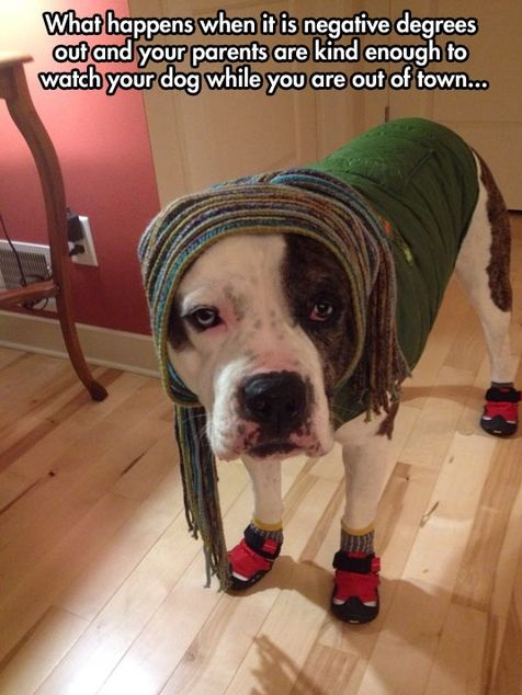 funny-picture-dog-parents