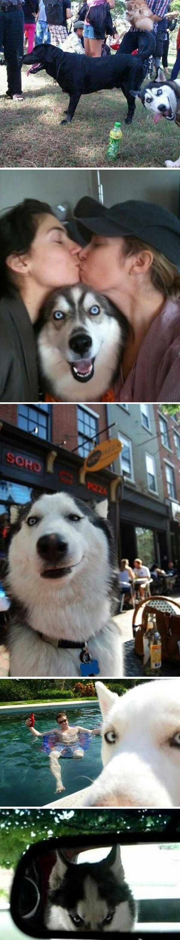 funny-picture-dog-phto-bomb