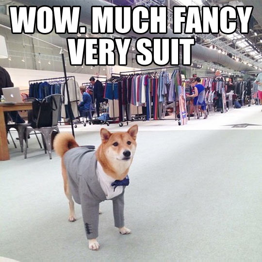 funny-picture-doge-cute-puppy-suit