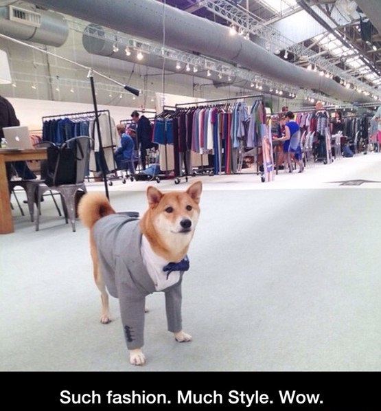 funny-picture-doge-suit-style
