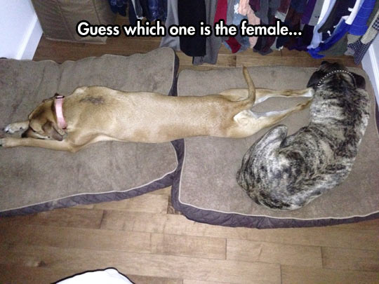 funny-picture-dogs-pillow-stretch-sleeping