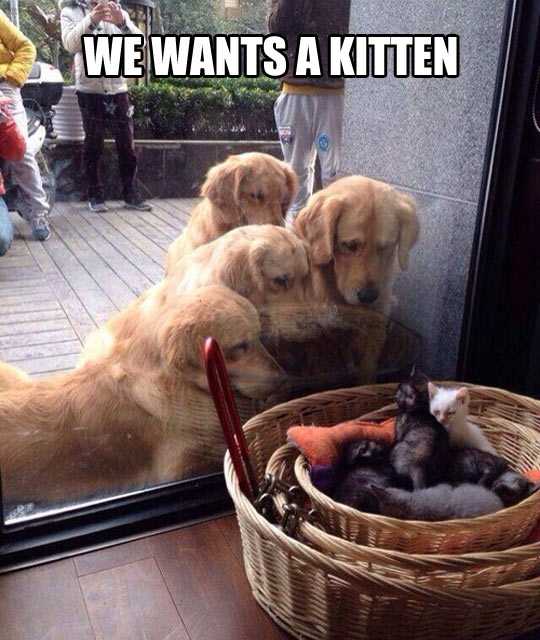 funny-picture-dogs-staring-kittens-window