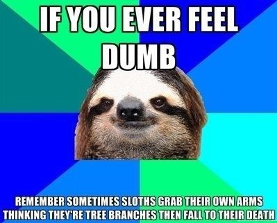 funny-picture-dumb-sloths