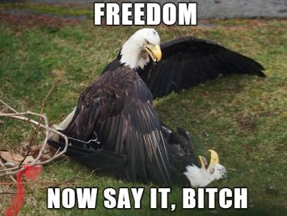 funny-picture-eagle-freedom-america